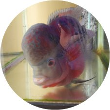 淡水魚から海水魚まで泳いでます。