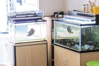 リラックス効果やストレス緩和効果がある観賞魚